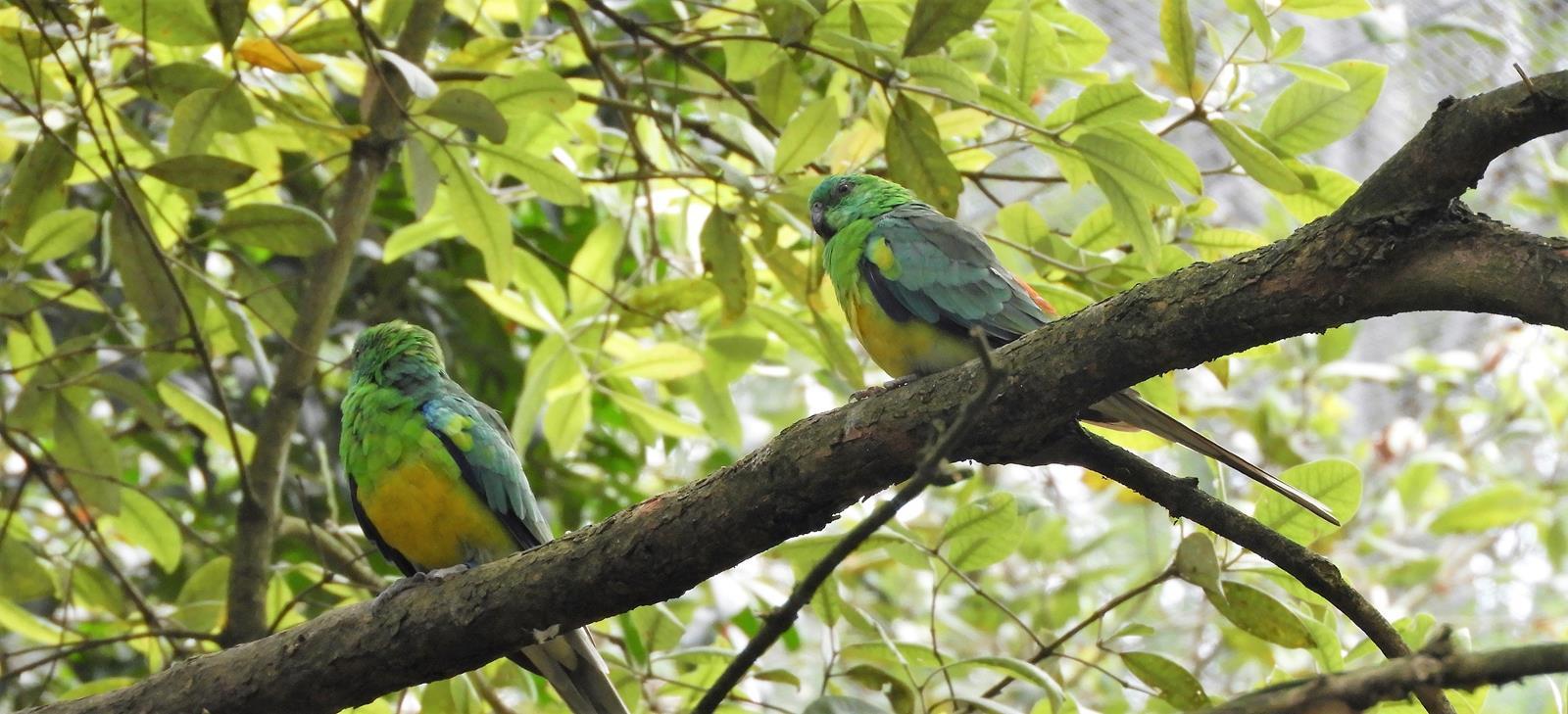 Taronga Zoo Ścieżki Mojego Świata