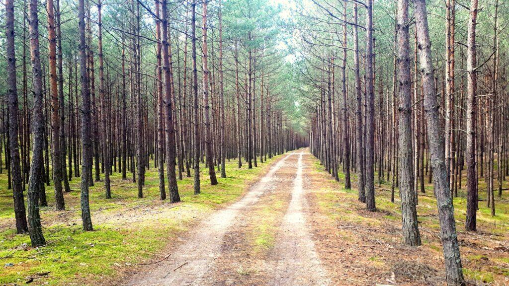 Mikoszewo Ścieżki Mojego Świata