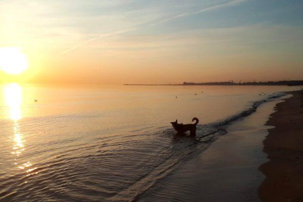 Gdzie oddać psa na czas wyjazdu na wakacje czy weekend