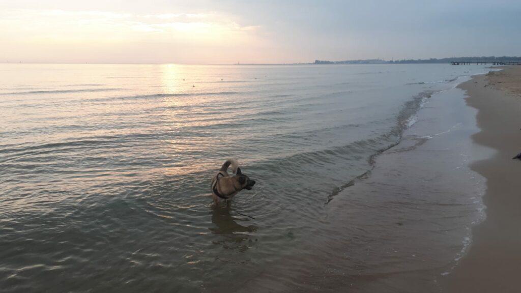gdzie oddać psa na czas wyjazdu
